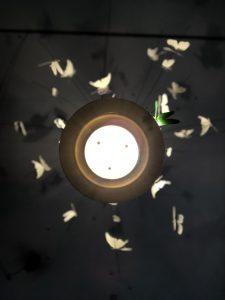 dettagli atmosfera festa delle farfalle